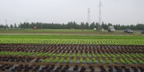 河北张家口市尚义县七甲乡七甲村闲置农房