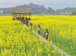 【把党的十九大精神全面落实在重庆大地上】我市将打造乡村旅游发展试点示范区