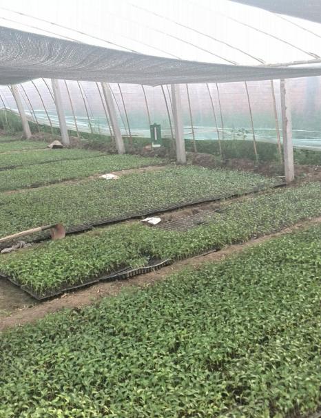 宁津县富友益众家庭农场