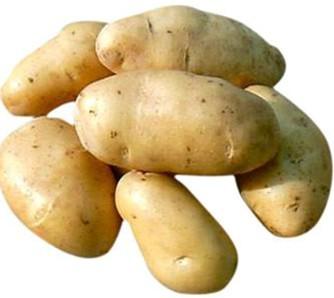 河北唐山土豆
