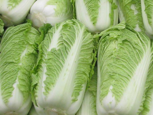 河北唐山大白菜