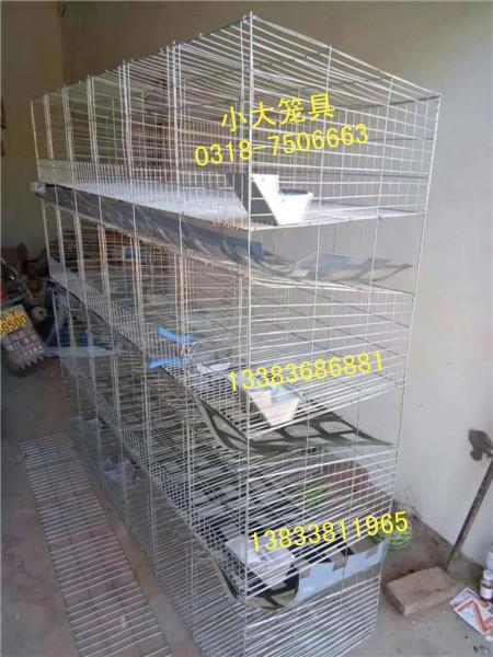 肉鸽笼蛋鸽笼兔子笼狐狸笼鹌鹑笼宠物笼运输笼鸡笼鸽子笼兔笼貉笼