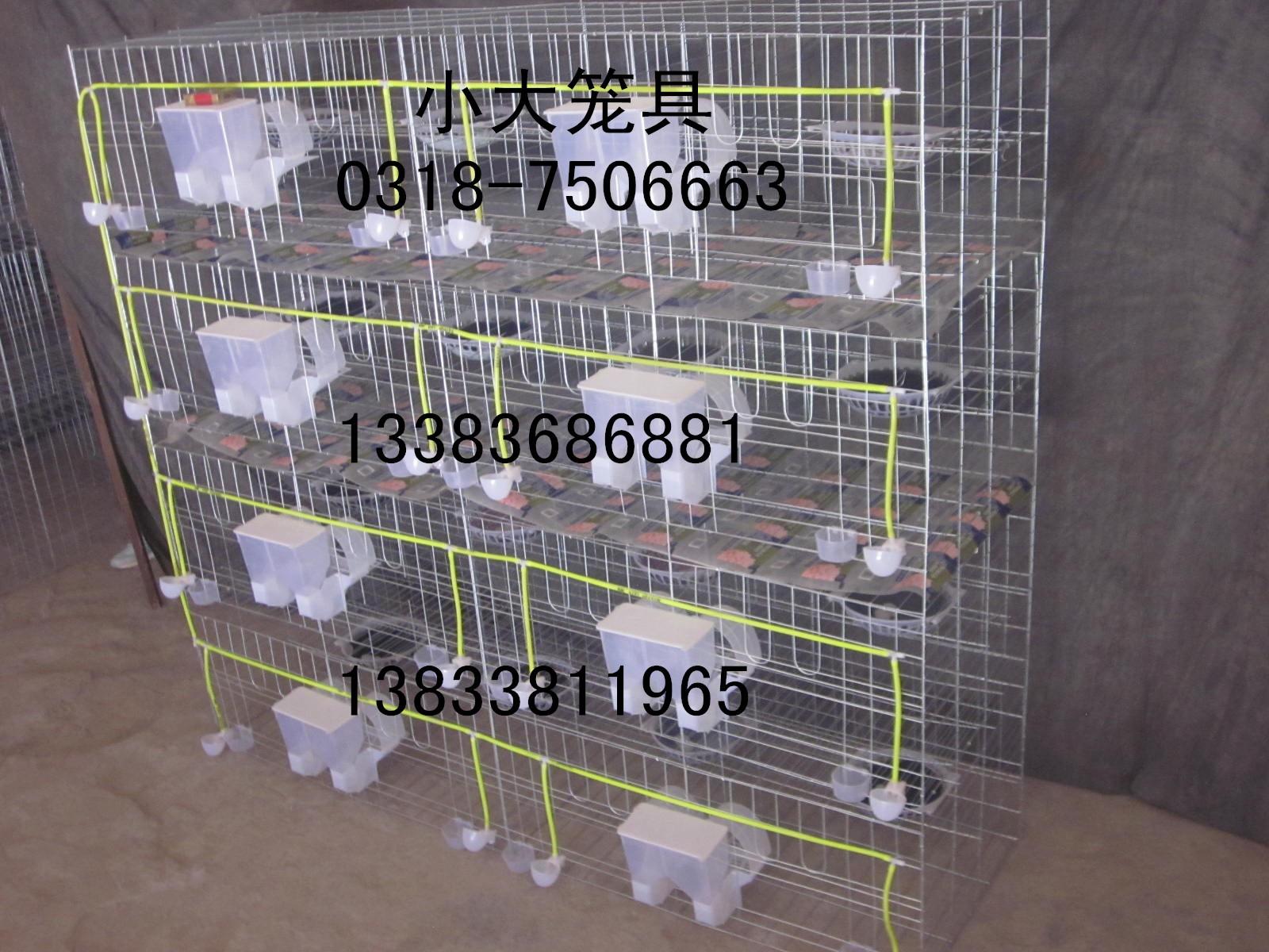 鸡鸽兔笼鹌鹑笼鹧鸪笼鸽子笼兔子笼狐狸笼宠物笼鸡笼鸽笼兔笼鸟笼