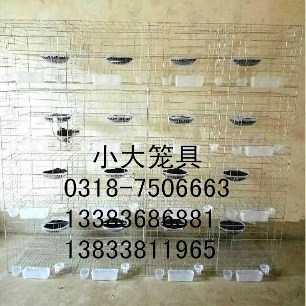 供应兔子笼 鸽子笼 鸡笼 鹧鸪笼 鹌鹑笼 宠物笼 运输笼 狐狸笼 塑料网 铁丝网